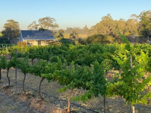Cabernet Cottage behind the cabernet sauvignon vines