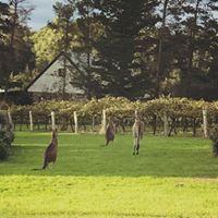 Kangaroos outside the office